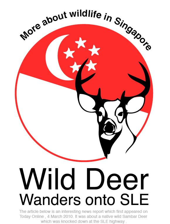 Wild Deer in SLE